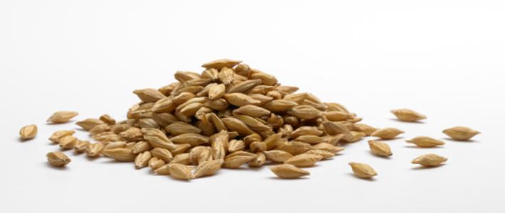 Barley_Edit_Web